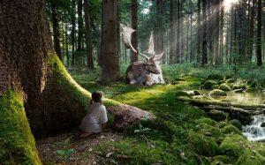 préservation nature, écologie, Toc Toc Tiny