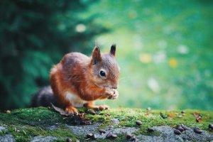 écureuil, nature, forêt, respect
